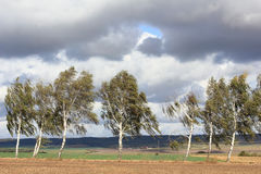 Landweg met berken in de herfst Stock Afbeelding