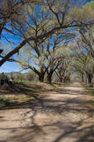 Landweg met bomen Royalty-vrije Stock Afbeelding