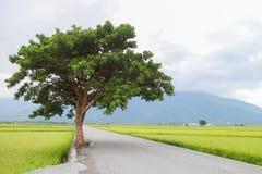 Landweg met boom Stock Fotografie