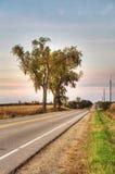 Landweg met Drie Bomen Royalty-vrije Stock Afbeeldingen