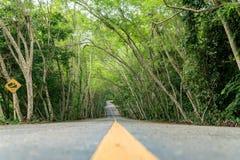 Landweg met gevoerde boom, boomtunnel Royalty-vrije Stock Foto