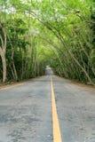 Landweg met gevoerde boom, boomtunnel Royalty-vrije Stock Afbeelding