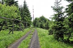 Landweg met gras in het midden stock afbeeldingen