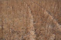 Landweg met gras wordt overwoekerd dat Droog gras stock afbeeldingen