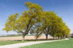 Landweg met groene weg Royalty-vrije Stock Afbeelding