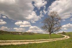 Landweg met oude droge bomen royalty-vrije stock afbeeldingen