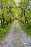Landweg met wilgen Stock Fotografie
