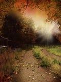 Landweg mit Blättern Stockbilder