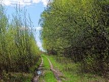 Landweg na Regen Stock Fotografie