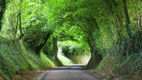 Landweg in Normandië, Frankrijk stock video