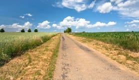 Landweg onder graan en tarwegebieden Royalty-vrije Stock Foto