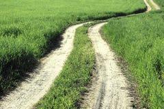 Landweg op de zomergebied onder groen gras, landelijk landschap Royalty-vrije Stock Afbeeldingen