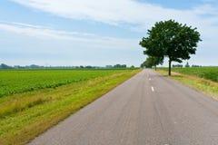 Landweg op gebieden Royalty-vrije Stock Foto's