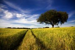 Landweg op gouden geel gebied royalty-vrije stock fotografie