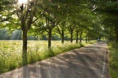 Landweg op vroege ochtend in de lente Royalty-vrije Stock Afbeelding