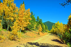 Landweg, pijnboompiek en espen in de bergen Royalty-vrije Stock Afbeeldingen