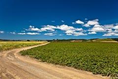 Landweg in platteland Royalty-vrije Stock Fotografie