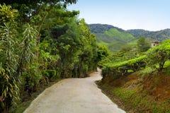 Landweg in theeaanplanting, de hooglanden van Cameron, Maleisië Stock Foto
