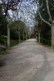 Landweg tussen bomen royalty-vrije stock afbeeldingen