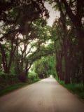 Landweg van Eiken Stock Afbeelding