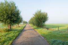 Landweg vroeg een nevelige ochtend Royalty-vrije Stock Afbeeldingen