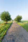 Landweg vroeg een nevelige ochtend Stock Afbeeldingen