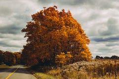 Landweggen in de herfst Royalty-vrije Stock Foto's