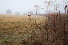 Landwiese auf einem nebeligen Morgen Stockfotos