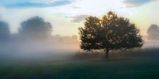 Landwiese auf einem nebeligen Morgen Stockbilder