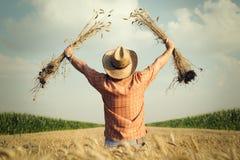 Landwirt überprüft das Weizenkorn auf dem Gebiet Stockfotografie