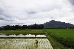 Landwirt Stockbild