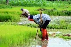 Landwirt Lizenzfreie Stockbilder