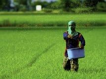 Landwirt lizenzfreie stockfotos