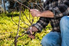 Landwirt arbeitet an der Beschneidung in einem Weinberg stockfotos