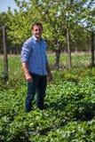 Landwirt auf dem Erdbeergebiet Lizenzfreies Stockbild