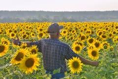 Landwirt auf dem Feld mit Sonnenblumen Stockfotos