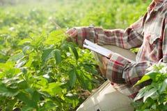Landwirt auf dem Landwirtschaftsgebiet stockbild