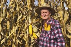 Landwirt auf dem Maisgebiet Lizenzfreies Stockbild