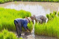 Landwirt auf dem Reisgebiet stockfotografie