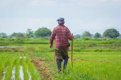 Landwirt auf dem ungeschälten Reis Lizenzfreies Stockfoto