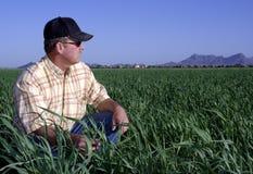 Landwirt auf dem Weizengebiet Stockfotos
