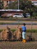 Landwirt auf einem Reisgebiet Stockfotografie