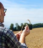 Landwirt auf einem Weizengebiet Stockfoto