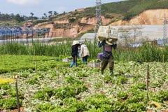 Landwirt auf Feld lizenzfreie stockfotos