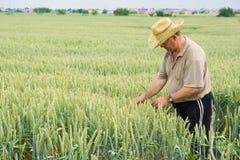 Landwirt auf Weizenfeld Stockfotografie