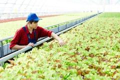 Junger landwirt bei der arbeit  Junger Landwirt Harvesting Crops Stockfoto - Bild: 99619642