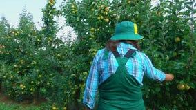 Landwirt betrachtet Äpfel auf Bäumen stock video footage