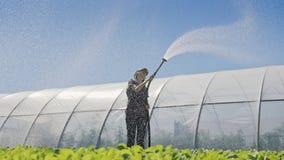Landwirt bewässert von den Sämlingen Junger hübscher Landwirt, der ihre Arbeit während der Bewässerungssämlinge enjoing ist stock video