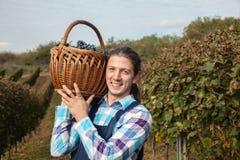Landwirt Carrying Basket Full von Trauben Lizenzfreies Stockbild