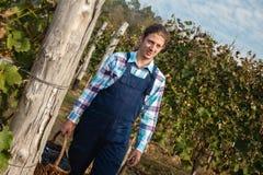Landwirt Carrying Basket Full von Trauben Lizenzfreie Stockfotos
